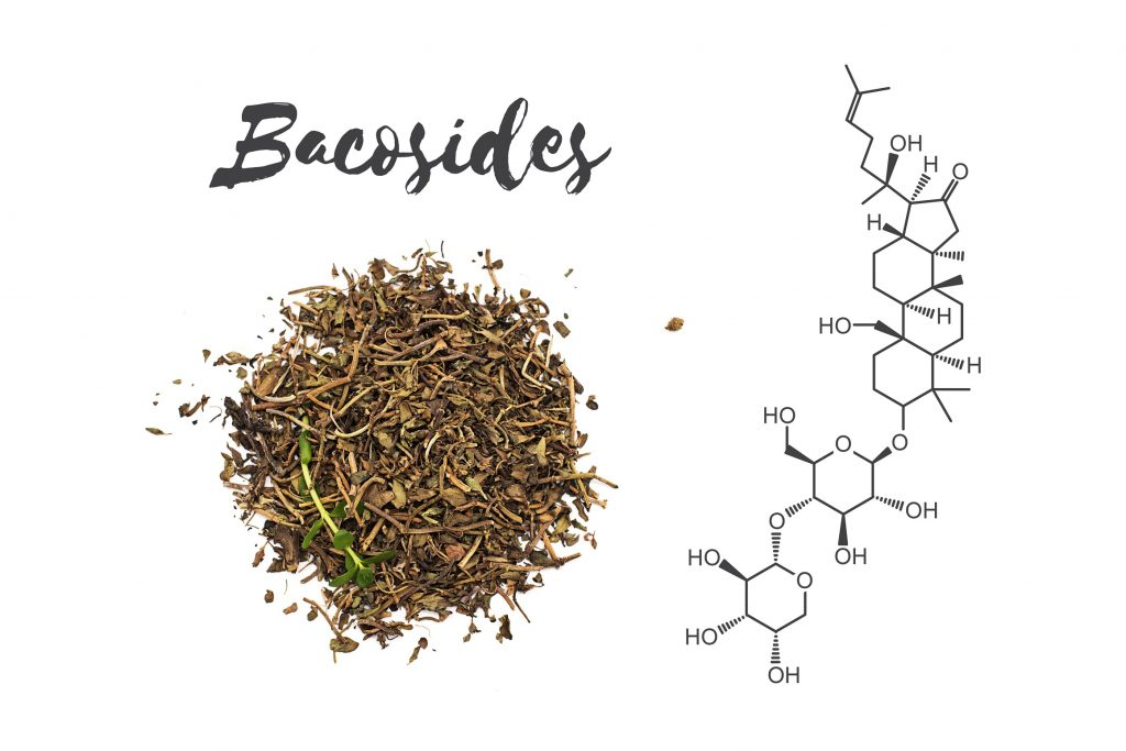 Bacosides - bioactive compounds found in Bacopa Monnieri