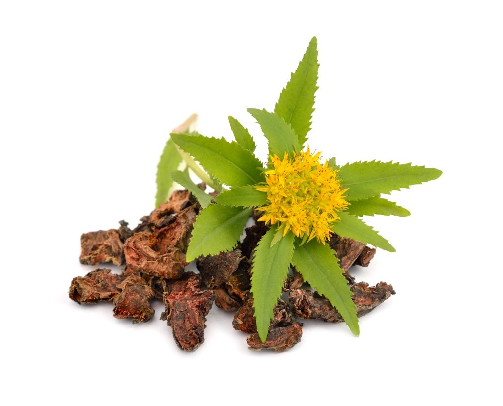 How does Rhodiola Rosea look like